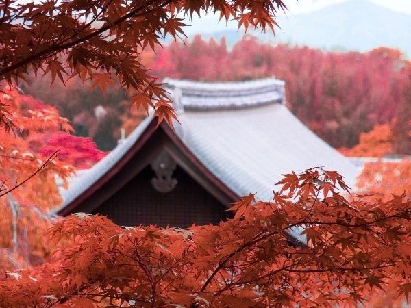 Kyoto Japan Autumn Bucket List