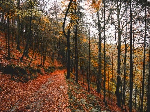 Wicklow Mountains Autumn Bucket List
