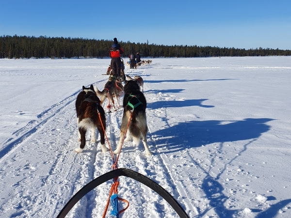 Husky sledding Finland