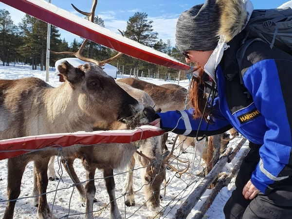 Reindeer Farm Lapland