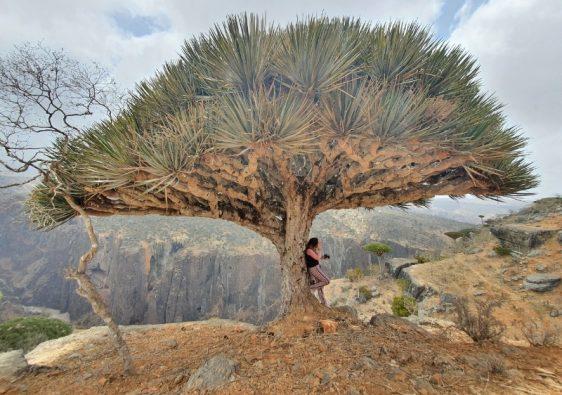 Visit Socotra