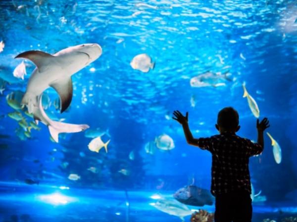 2-day Dubai itinerary - Dubai Aquarium